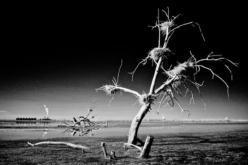 Dead Tree, Nests & Thermal Plants – Salton Sea, California – 2014