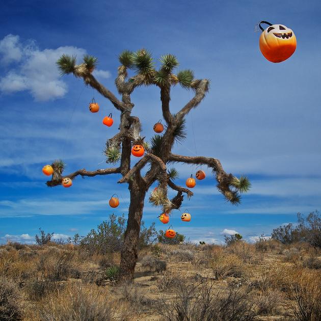 A Tree for All Seasons – Halloween – Rosamond, California – 2012