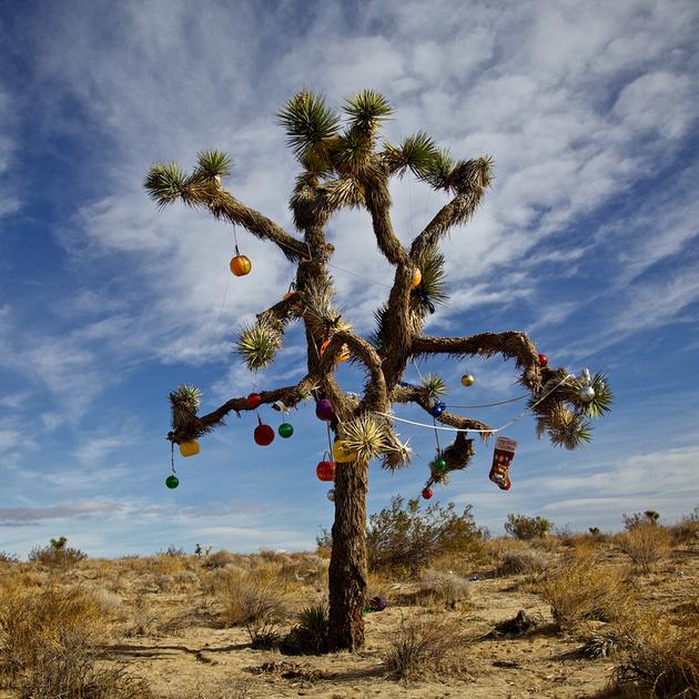 A Tree for All Seasons No.1 - Rosamond, CA - 2012