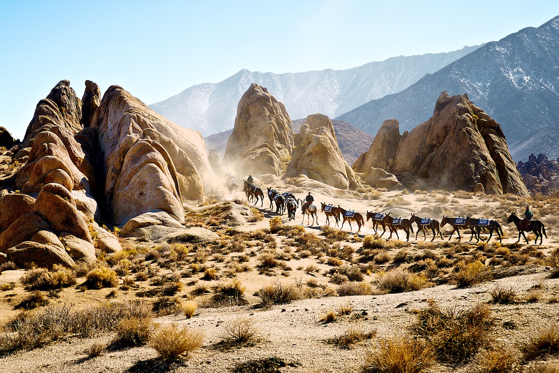 Mule Train Winds through the Alabama Hills outside Lone Pine, CA - 2013